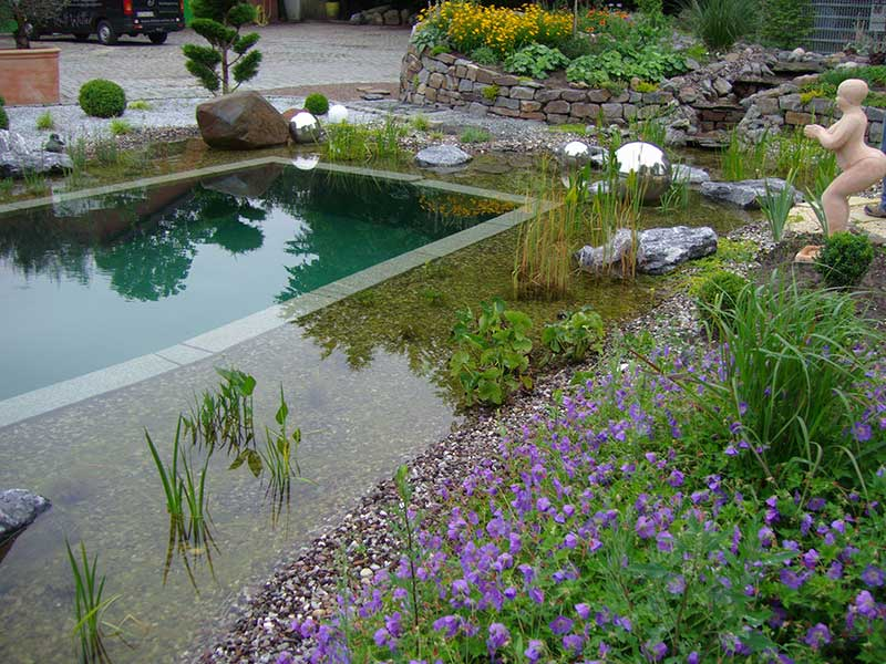 Schwimmteich mit bepflanzter Reinigungszone