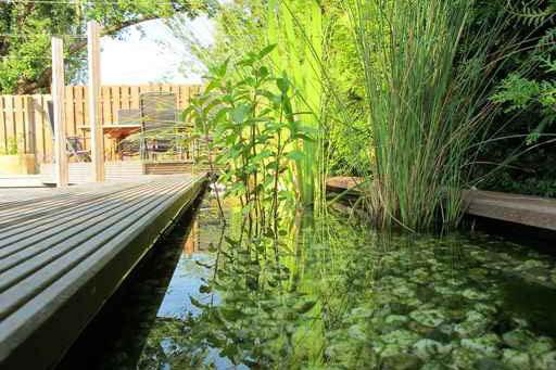 Zierteich Wasserpflanzen